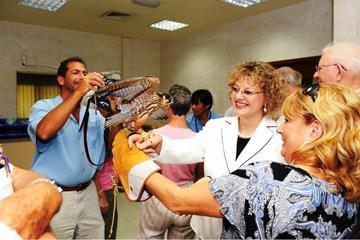 Tour zur Scheich-Zayid-Moschee und...
