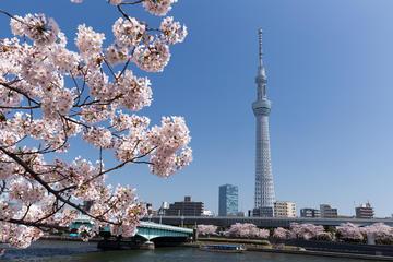 Japan Sakura Tour 11days