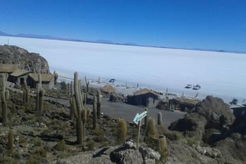 Private Cultural Tour: Uyuni  Salt  Flats includes grazing of llamas