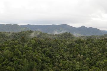 ノースランドの熱帯雨林で過ごす1日