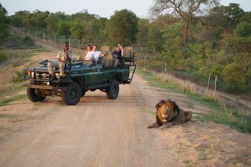 Safari-Tour ab Kapstadt einschließlich Mittagessen