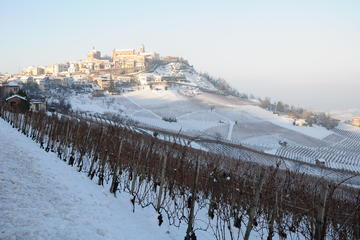 From Turin: Full day Langhe Region with its Colors and Flavors