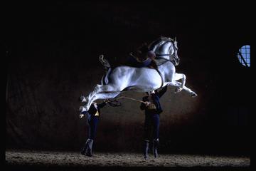 Spectacle de danse des chevaux...