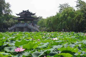 Excursión de un día a Hangzhou desde...