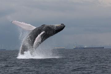 Excursión privada de un día de avistamiento de ballenas desde la...