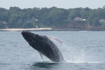 Recorrido de 3 días de la sabiduría de ballenas y delfines desde la...