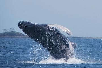 Small-Group Whale Watching Day Tour from Panama City