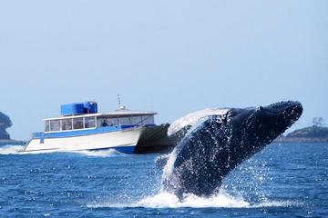 Whale Watching Day Tour from Panama City
