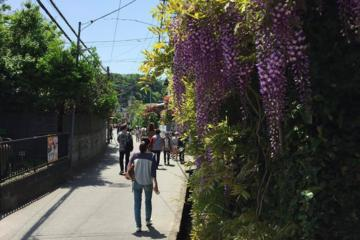 Kamakura Walking Tour: Explore Nature...