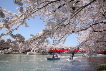 Private Cherry Blossom Tour in...