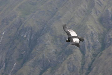 2-Day Condor Sightseeing Tour From Cusco