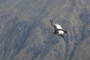 Excursão turística de 2 dias em Condor saindo de Cusco