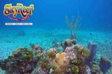 Amazing Snorkeling & Beach break in Cozumel