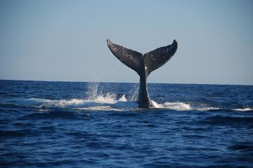 Cabo San Lucas Whale-Watching Adventure