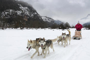 Tena Valley Dog Sledding in The Pyrenees