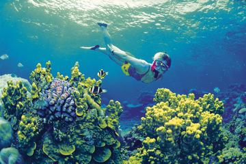 4-daagse tour Cairns en Great Barrier Reef