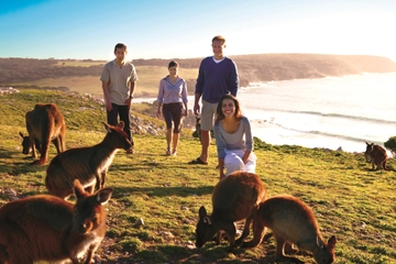 5-tägige Tour nach Adelaide und Kangaroo Island inklusive Barossa...