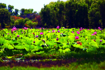 Croisière sur le fleuve Mary et ses zones humides au départ de Darwin