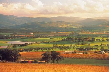 Excursão de um dia pelas vinícolas de Yarra Valley e no trem a vapor...