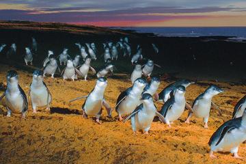 Excursão à Ilha Phillip saindo de...