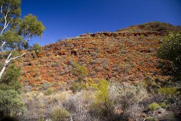 Excursion en 4x4 à Palm Valley au départ d'Alice Springs