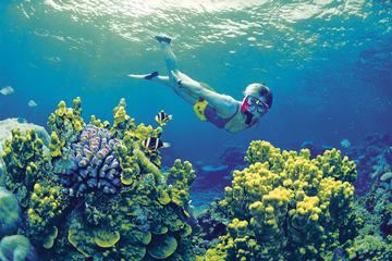 Tour di 4 giorni di Cairns e della Grande Barriera Corallina