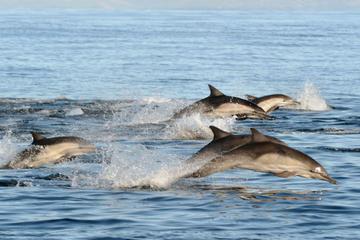 Viagem diurna ao Porto Stephens com observação de golfinhos...