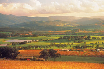Yarra Valley Wineries and Puffing Billy Steam Train Day Tour from...