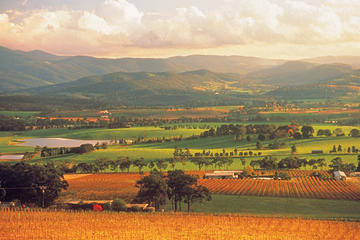 Yarra Valley Wineries and Puffing Billy Steam Train Tour from Melbourne