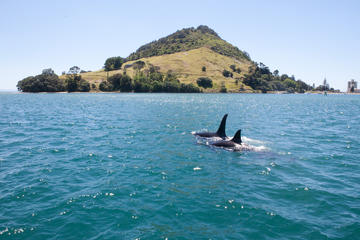 1-Hour Tauranga Harbour Scenic Cruise...