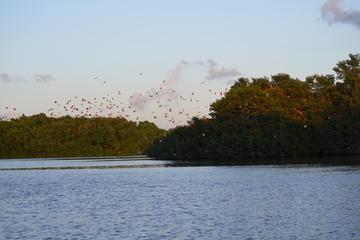 Caroni Wetlands Boat Tour