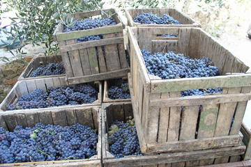 Private Day Trip to Montalcino and Montepulciano from Florence