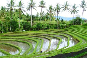 Bali Highlight Tours