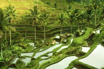 Bali Shore Excursion : Customize Private Full day Tour From Benoa Port