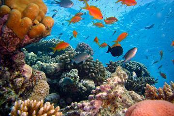 Blue Lagoon Snorkeling East Bali