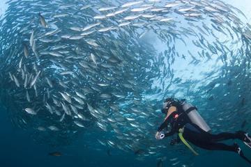 Shipwreck Tulamben Diving Tours