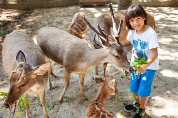Bali Zoo General Admission Ticket