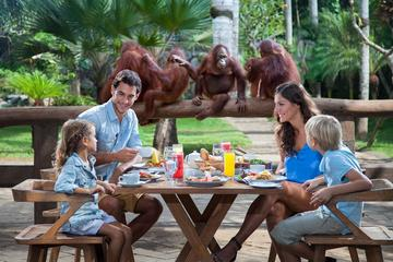 Breakfast with the Orangutans at Bali...