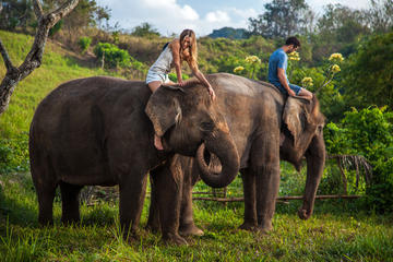 Mahout for a Day Experience at Bali Zoo Including Lunch and Balinese...