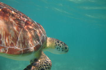 Snorkeling with Turtles in Akumal and Yalku Lagoon