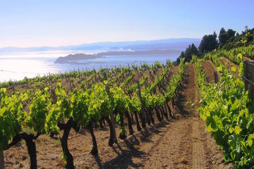 Private Tour: Thessaloniki and North Greece Grand Vineyard Tour