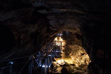 Ausflug zu den Glowworm Caves ab Te Anau oder Queenstown