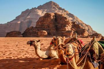 Private Half-Day Aqaba Shore Excursion to Wadi Rum Lawrence of Arabia