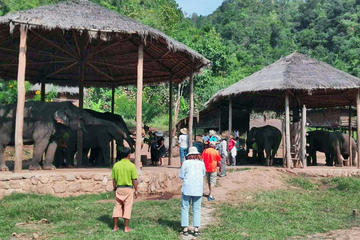 Full-Day Visit to Kalaw Elephant Sanctuary in Myanmar