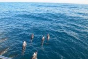 Kona Shore Excursion: Wild Dolphin - Reefs -Sea Caves -Kealakekua Bay...