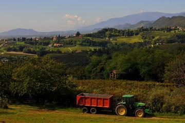 Ruta del vino en Prosecco para grupos pequeños desde Venecia con cata...
