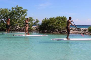 Stand Up Paddle Boarding Tour