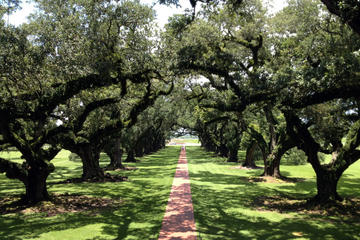 Book Small-Group Tour of Oak Alley and Laura Plantation from New Orleans on Viator