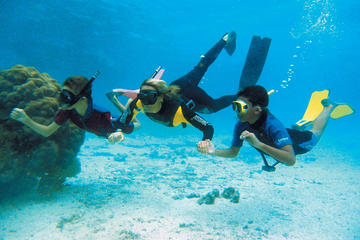 Tour de buceo de superficie en el...