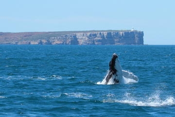 Jervis Bay Whale Watching by Large...